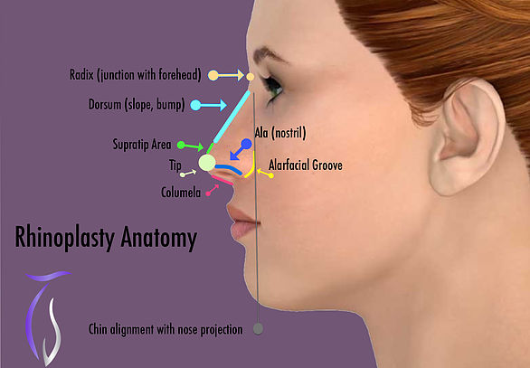 Rhinoplasty surface anatomy